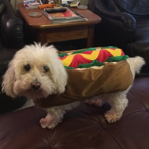 My dog Ollie getting in on the Halloween action!